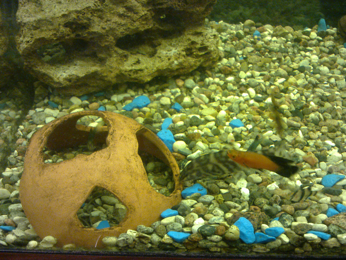 Грот из камня в аквариум своими руками.фото
